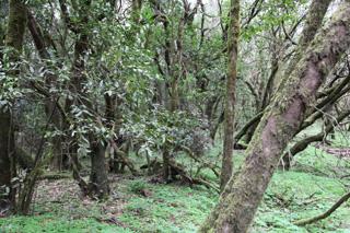Национальный парк Гарахонай, Ла Гомера